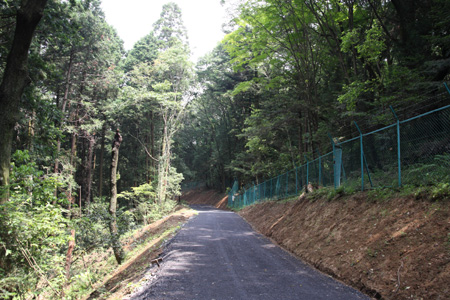 縄竹橋の林道