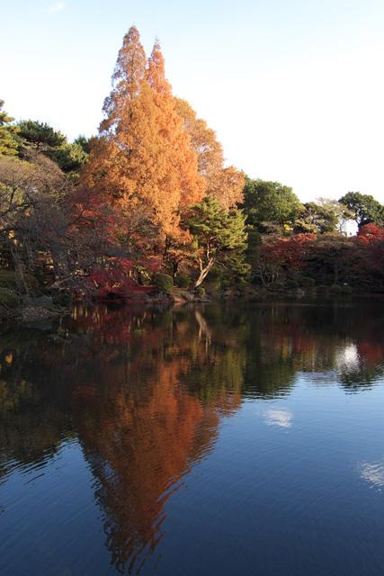 新宿御苑の紅葉(LX3)