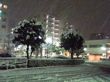 雪が積もった・・