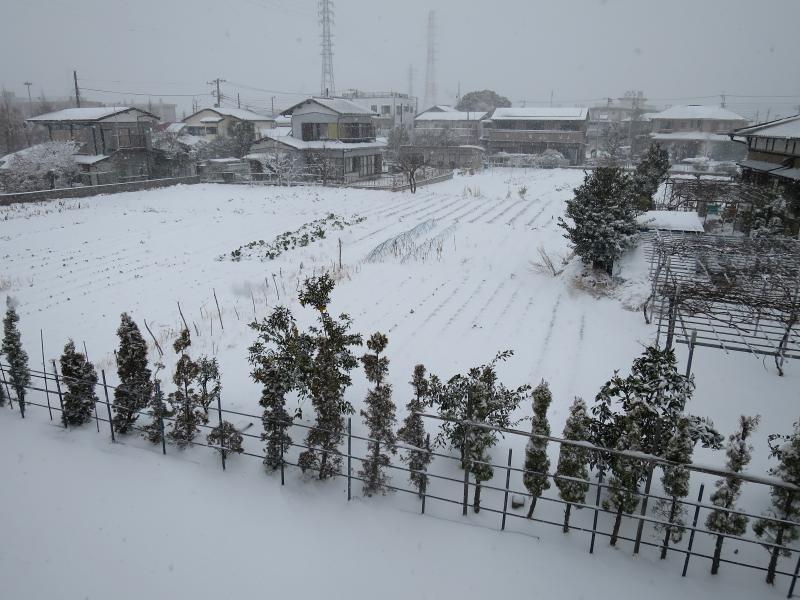20年ぶりの大雪