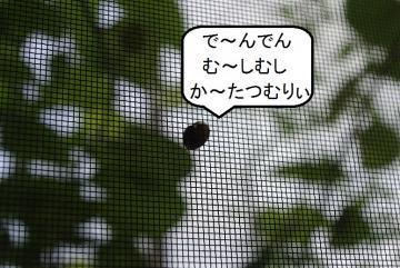 _IGP9111.jpg