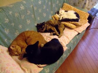 家のお猫ちゃんずw~急に涼しくなった10月の朝~珍しく4匹で寝ていました!2011.10.03