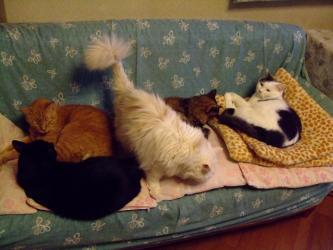 家のお猫ちゃんずw~急に涼しくなった10月の朝~5匹これで!全員集合です!2011.10.03