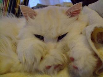 オカヤドカリハウスの上に乗っかってくつろぐもしゃもしゃ~ウニ夫君wお昼寝中w2012.02.05