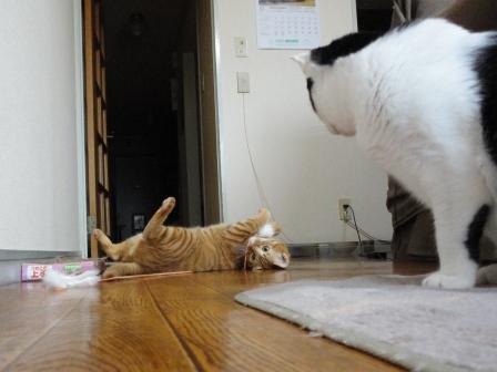 0002猫の記憶力 (5)