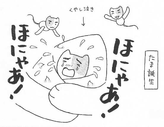ねこ夫婦まんが たまともんちゃん-syussei1