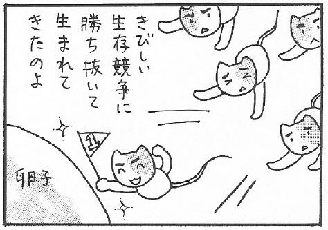 ねこ夫婦まんが たまともんちゃん-syussei7
