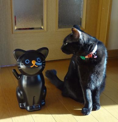 猫のゴミ箱 と まめ