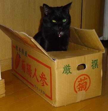 まめ;箱入りまめ