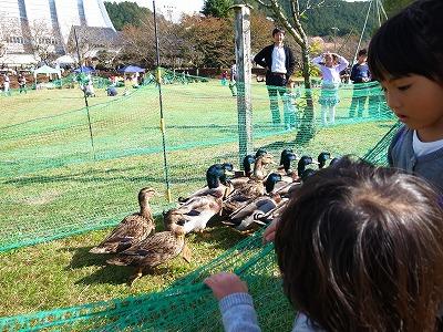 丹波有機農業祭2012151