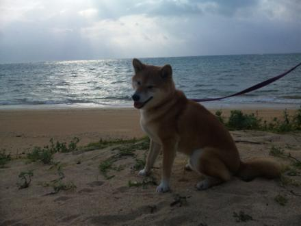 20110918-ishigaki3.jpg