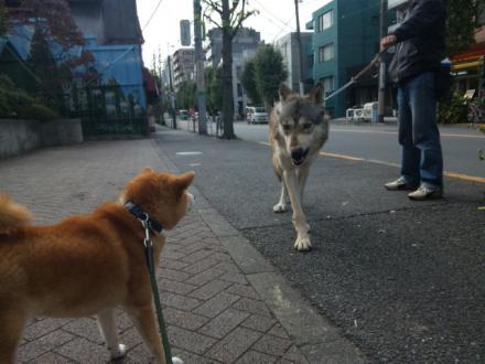 big-dog.jpg