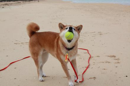ishigaki-ball2.jpg