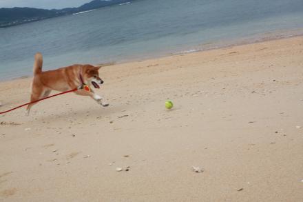 ishigaki-chasing-ball.jpg