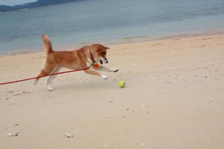 ishigaki-chasing-ball2.jpg