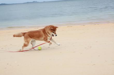 ishigaki-chasing-ball3.jpg
