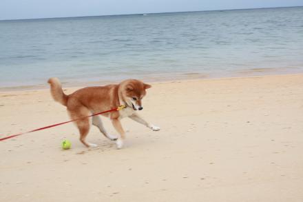 ishigaki-chasing-ball4.jpg