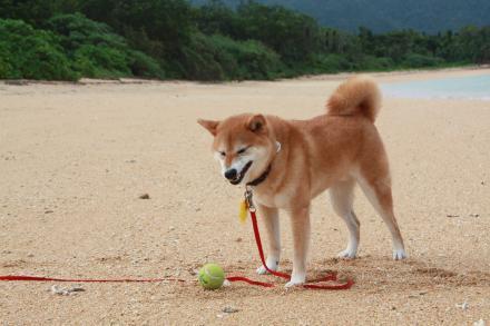 ishigaki-sand.jpg