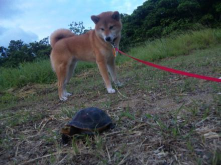 ishigaki-turtle2.jpg