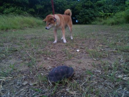 ishigaki-turtle3.jpg