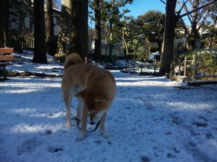 snowing2012-5.jpg