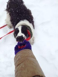 雪の中引っ張りっこ