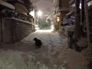 夜の雪散歩