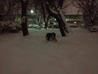 夜の雪公園