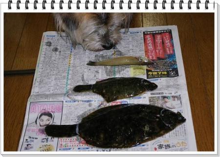 fish 006