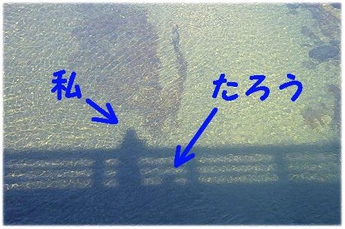 12_20120219123228.jpg