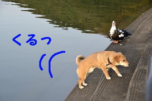 4_20120301231429.jpg
