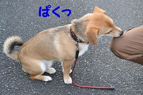 5_20120214203611.jpg