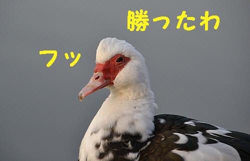 6_20120301210556.jpg