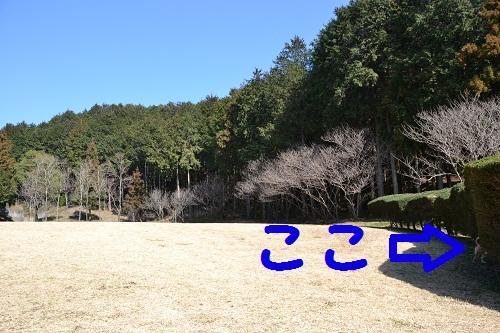 7_20120213213025.jpg
