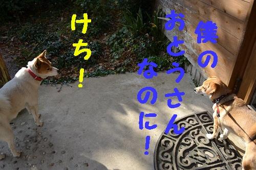 8_20111207221601.jpg