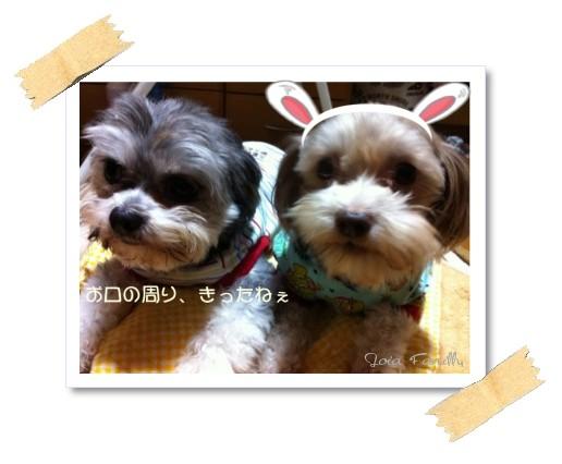 totymacha11gatsu.jpg