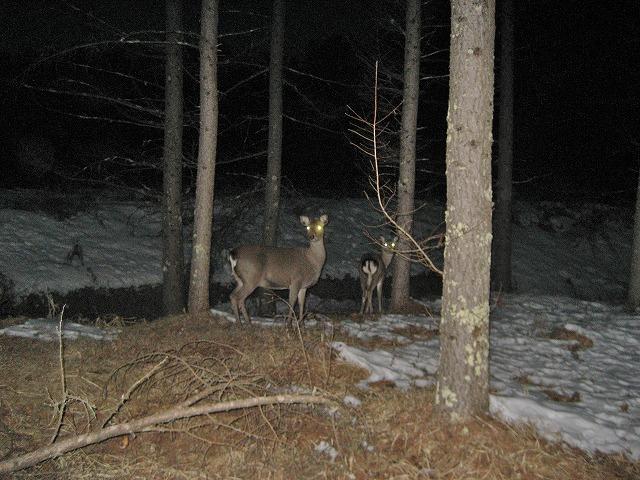 20140120怪しい鹿の眼 (1)