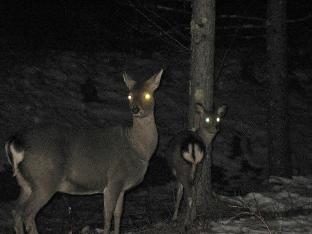 20140120怪しい鹿の眼 (2)