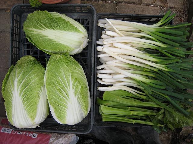 20141031焼津だより野菜編 (1)
