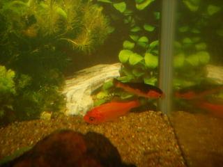 金魚2匹1
