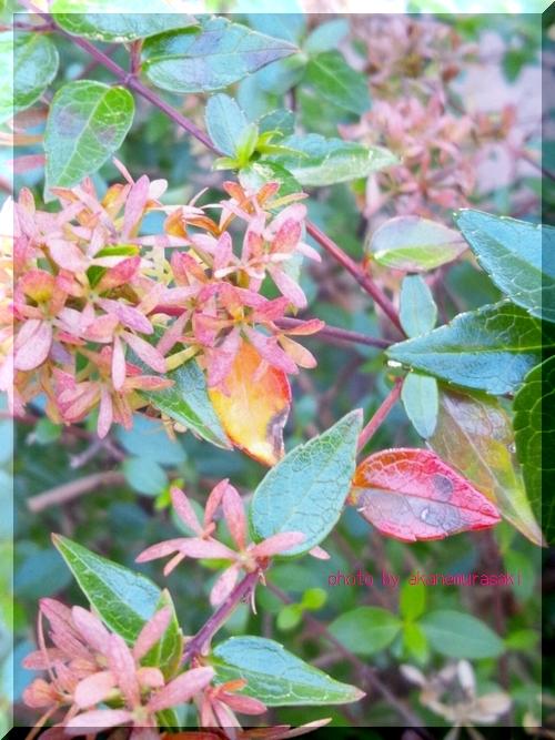 花の紅葉2