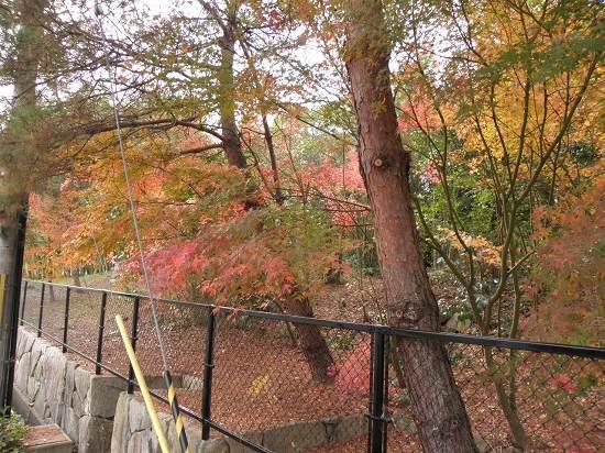 播磨屋さんの庭
