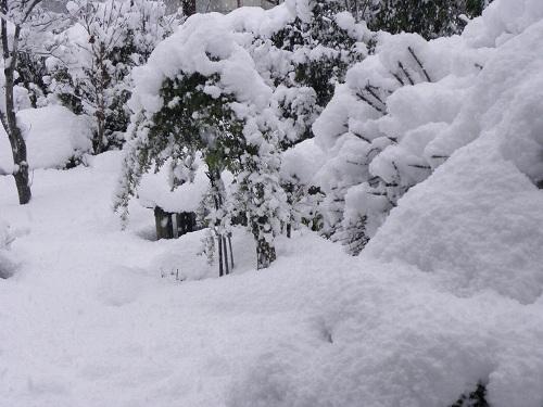 雪模様午後3時過ぎ
