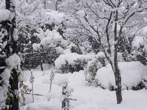 雪模様午後1時過ぎ