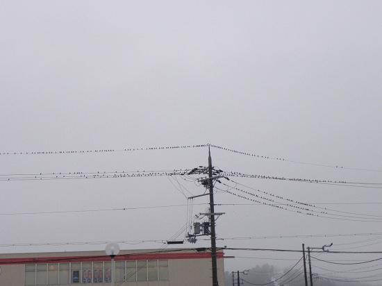 何の鳥? 遠くて分らない・・・