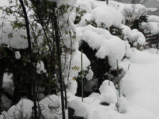 今朝の雪(庭)