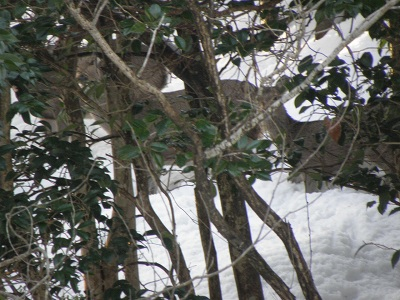 見えますでしょうか。 鹿3頭