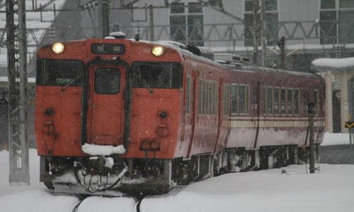 タラコキハ48