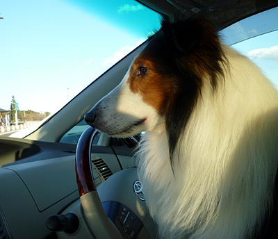 レオ運転席