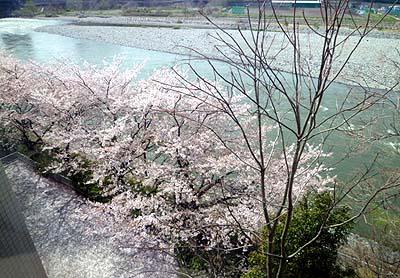 桜&利根川